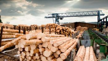 Сырье Для деревообработки